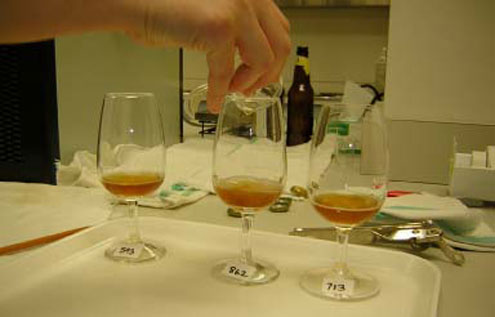 Numbered 20ml beer samples await sensory analysis